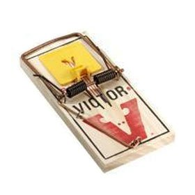 Trapping with mouse traps mousetraps rat traps rattraps