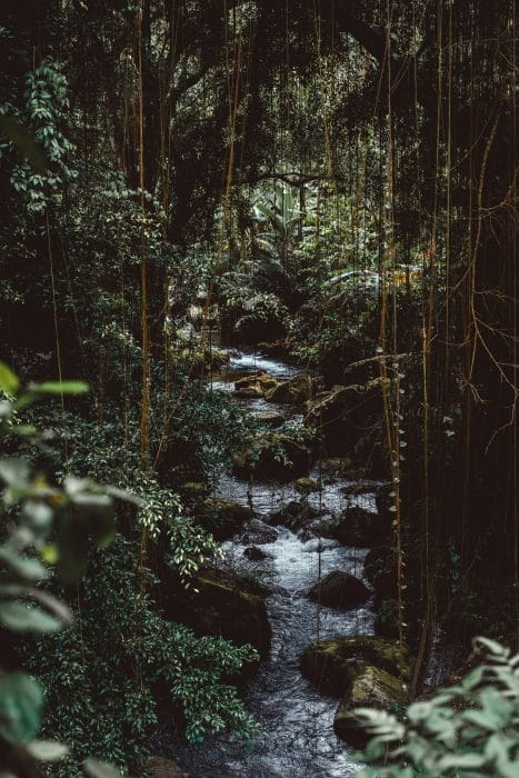 water in the jungle